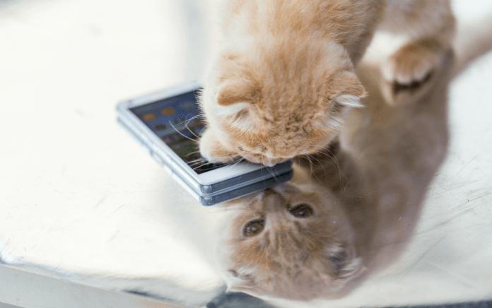 Evcil Hayvan Uygulamaları